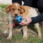 chiot-male-vallee-desix-6